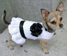 плетена рокля, мини пинчер, плетена дрешка